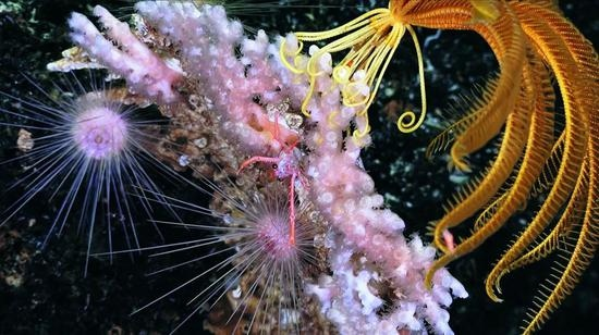 这些深海细菌能绕过人体免疫系统